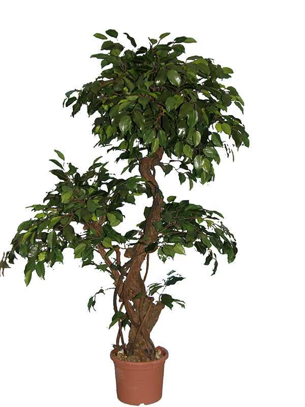 Искусственное дерево в горшке своими руками 85